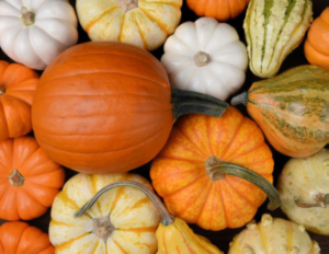 Cover photo for Pumpkin Production Workshop
