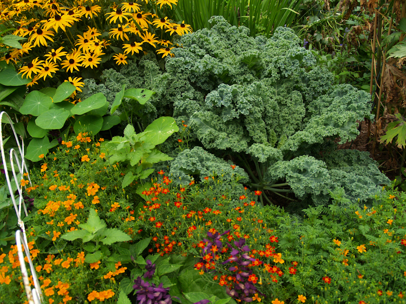 vegetable and flower bed
