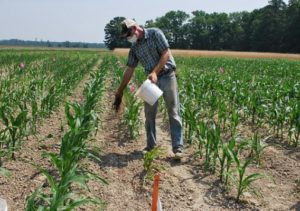farmer in field of corn