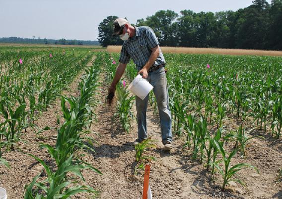 farmer in field of corn