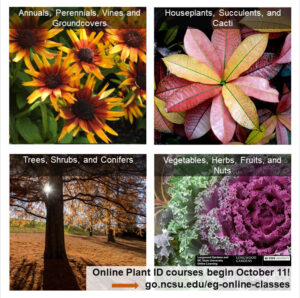 Cover photo for Online Plant ID Classes, Beginning October 11